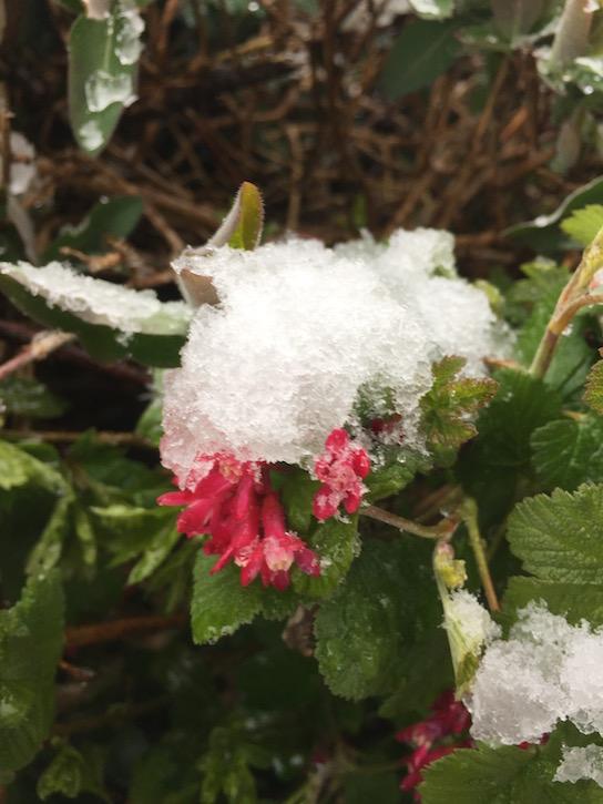Schnee April